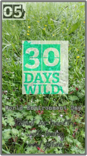 30 Days Wild- Day 5: Rabbits and Research