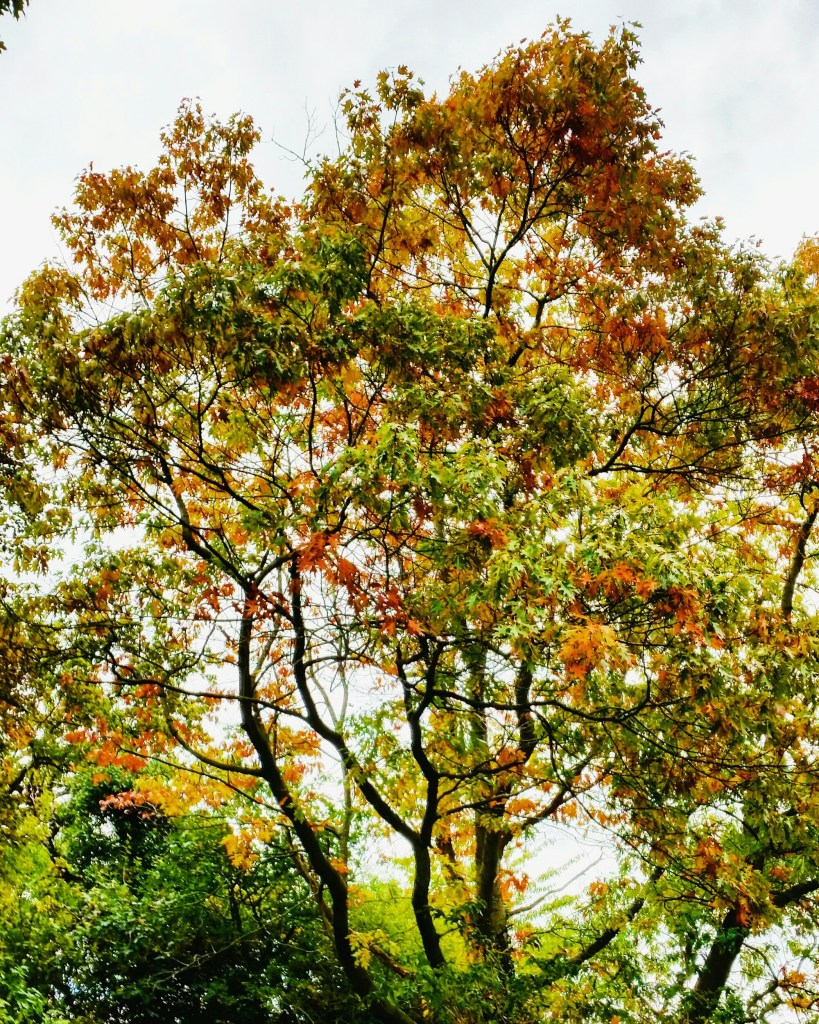 Living life our way, autumn colours, nature photography, seasonal pictures, photographer, natural environment, our world, autumn, seasons, colourful, art, photography, nature, Stay Wild, 30 days wild