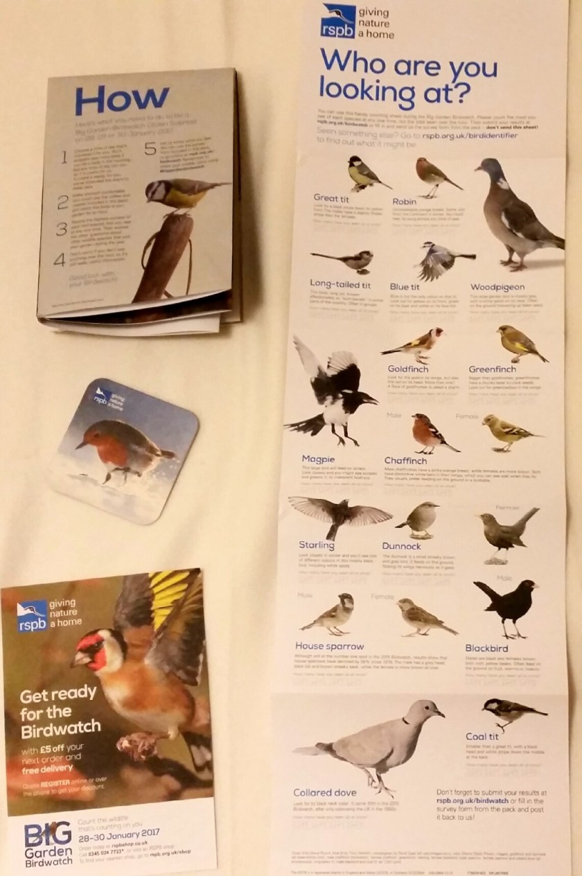 Big Garden Birdwatch, RSPB, #livinglifewild, Living Life Wild, Living Life Our Way, citizen science, nature, wildlife, environment, outdoors, green living, home education