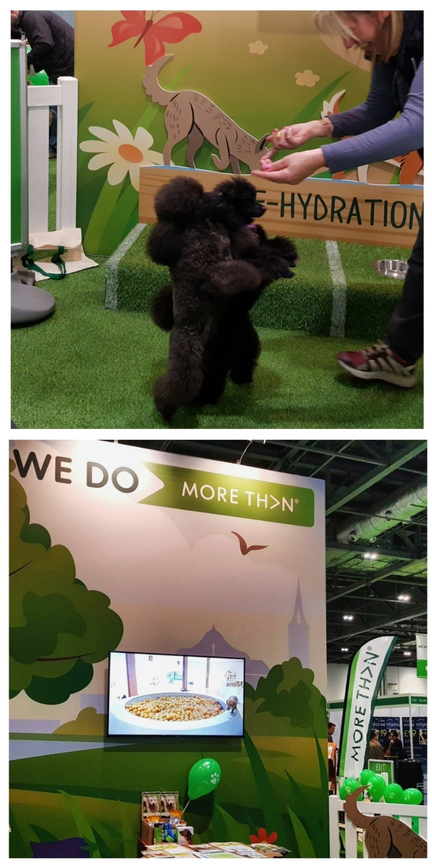 National Pet Show, More Than, Excel, London, days out, events, pets, family fun, animal lovers, freedom to learn