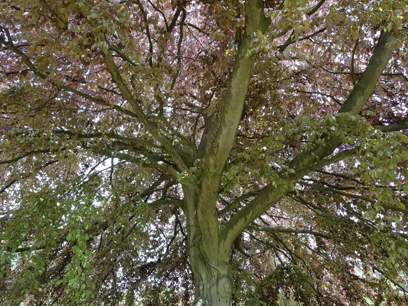 World Environment Day, #WorldEnvironmentDay, #WithNature, United Nations, Highfield Park, Living Life Our Way, 30 Days Wild, The Wildlife Trusts, photography, environment, #30DaysWild, #LivingLifeWild, campaign, outdoors, get outside, tree photo