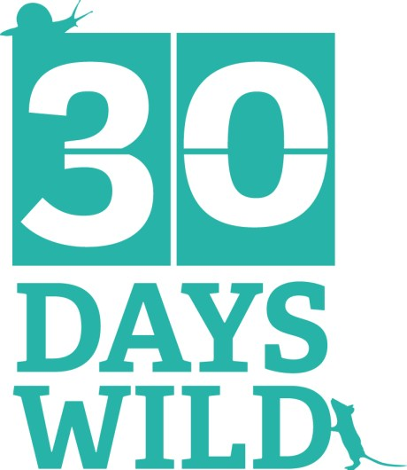 World Ocean Day, ocean, environment, plastic free, green living, #30dayswild, #livinglifewild, 30 days wild, marine conservation society