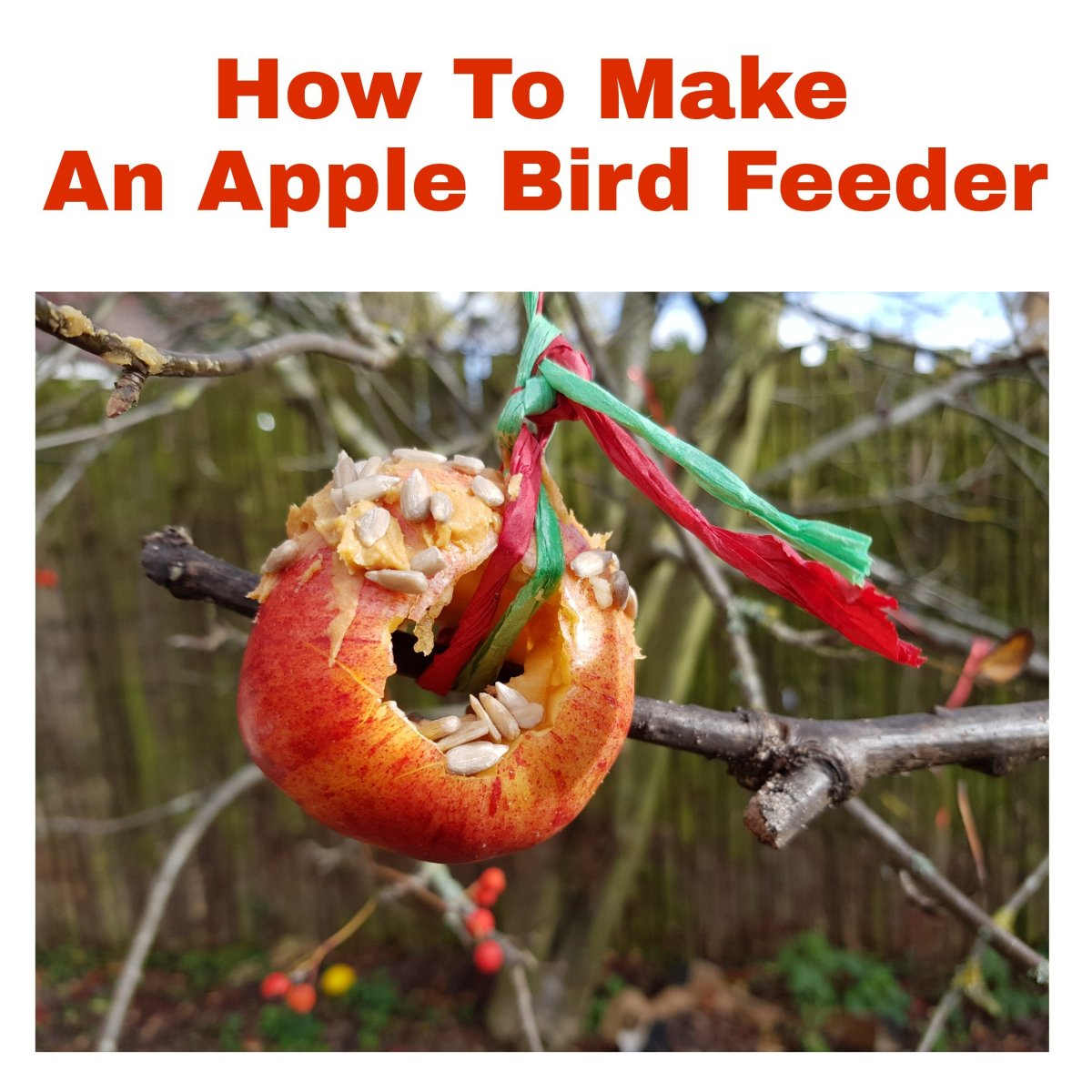 How To Make An Apple Bird Feeder: Protecting Birds in Winter