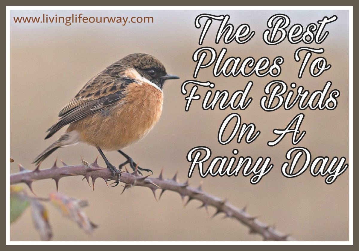 The Best Places to Find Birds on a Rainy Day