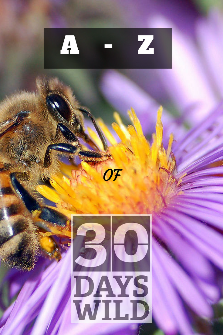 Bee image. A-Z of 30 Days Wild
