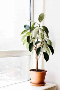80 Brilliant Apartment Garden Indoor Decor Ideas (28)