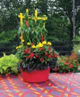 100 Beautiful DIY Pots And Container Gardening Ideas (93)