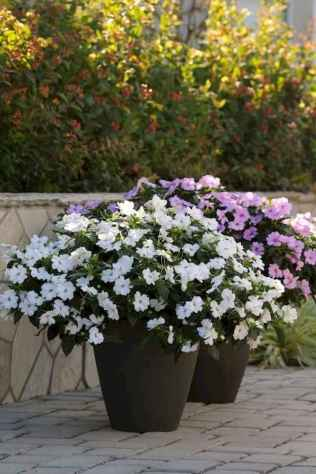 40 Beautiful Container Gardening Decor Ideas For Beginners (37)