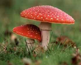 55 Creative Garden Art Mushrooms Design Ideas For Summer (6)