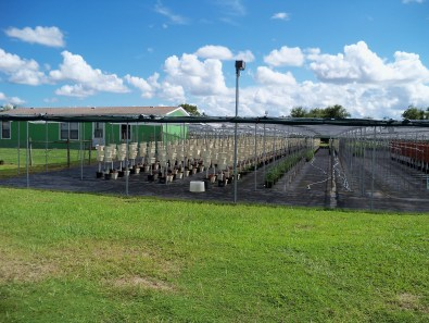 Green Place Farm 3