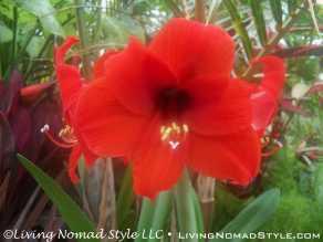 Conservancy Flower 2