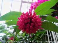 Conservancy Flower 7
