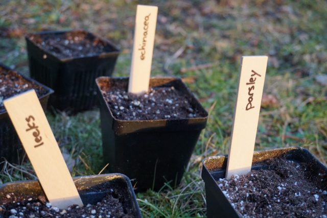 Non-gmo seeds for home garden