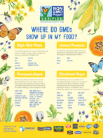 Where do GMOs Show Up in My Food?