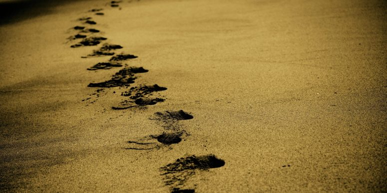 Ecological Footprints: A Butterfly Leaves No Tracks
