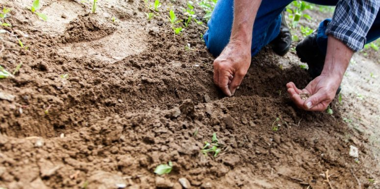 Patented Plants: Who Owns Our Global Seed Supply?
