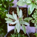How to grow herbs and save money all year