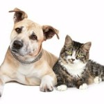 Purina offers free cat or dog adoption for 55+