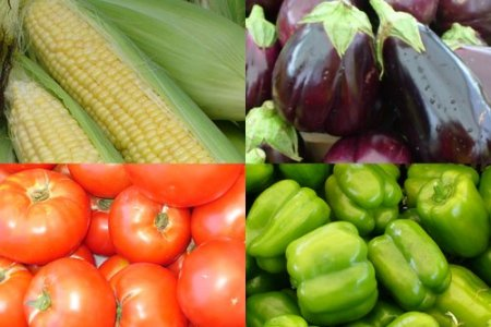 How to keep summer veggies fresh to avoid food waste