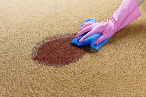 Cheap And Easy Carpet Cleaning Solutions Living On The Cheap