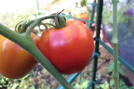 Make the most of your garden's harvest