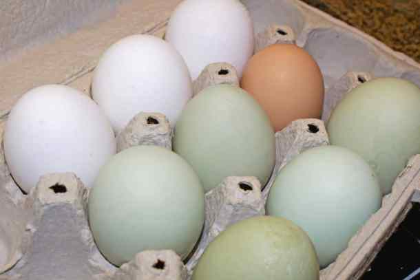 eggs-in-carton
