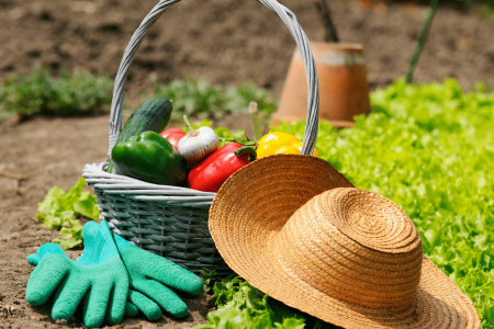 How to start a vegetable garden on the cheap
