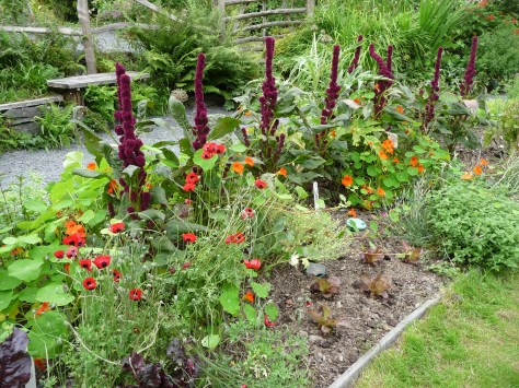 Companion Planting Living On The Veg