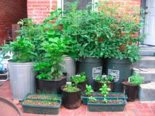 garden containers for indoor plants