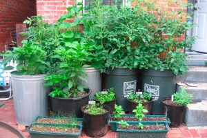 Garden Containers For All Plants