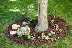 How to Landscape Around Trees