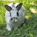 Ultimate Guide to the Best Rabbit Repellent For Your Backyard