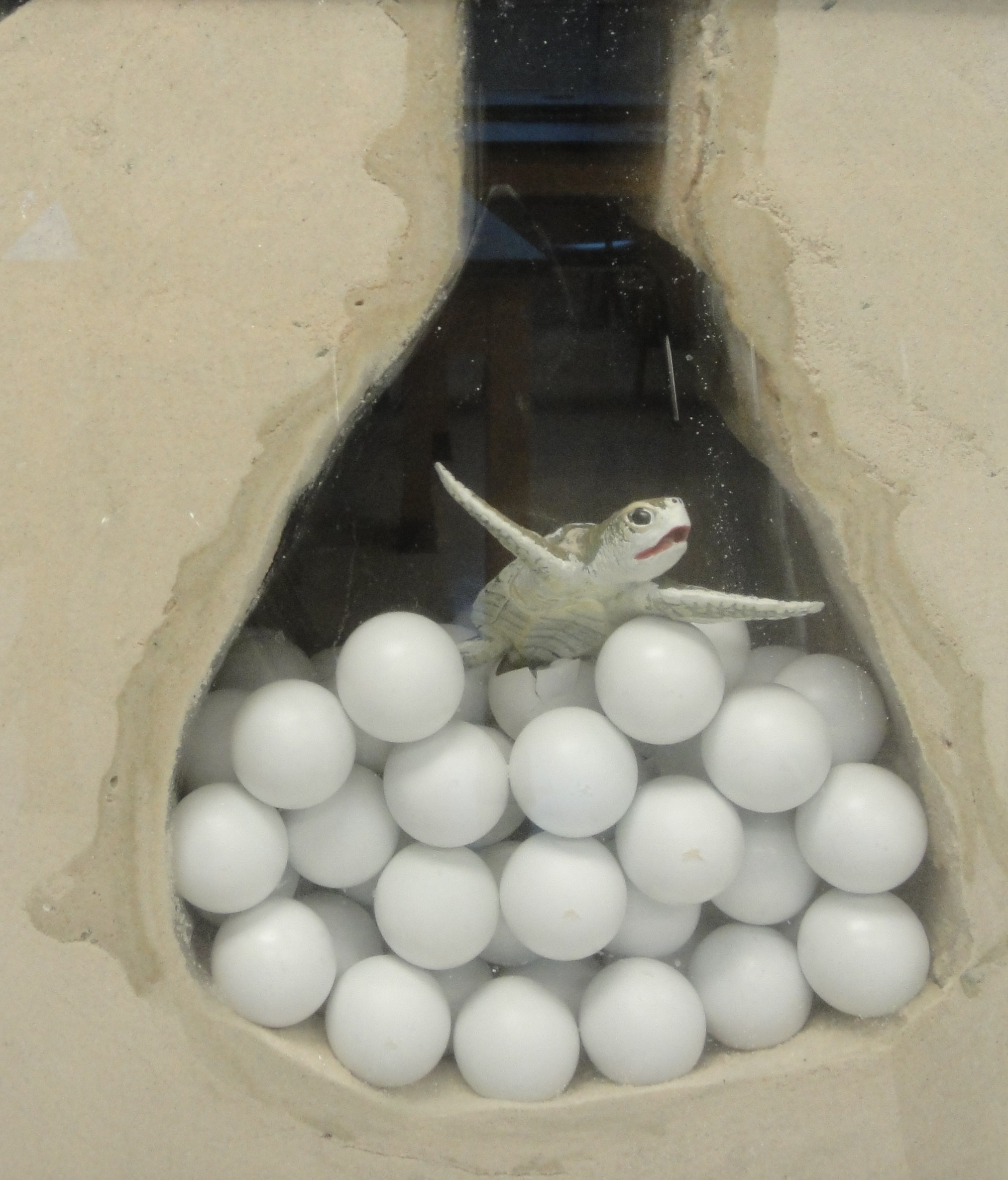 Sea Turtle Nest In The Classroom Living Porpoisefully