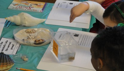 Sorting seashells