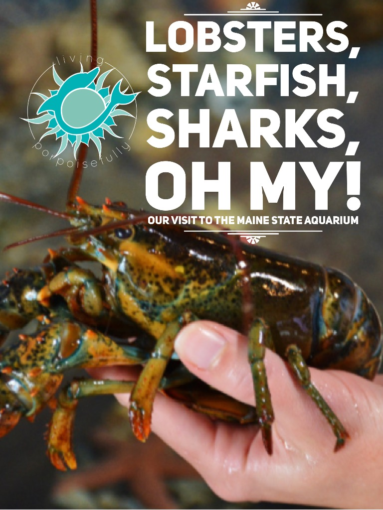 Lobsters, Starfish, Sharks, OH MY! (Maine Aquarium)