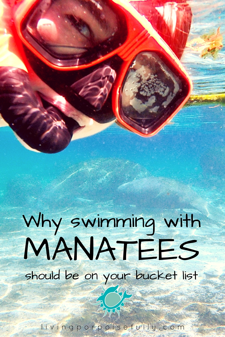 Why Swimming with Manatees Should Be on Your Bucket List