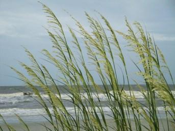 HHI dunes (4)