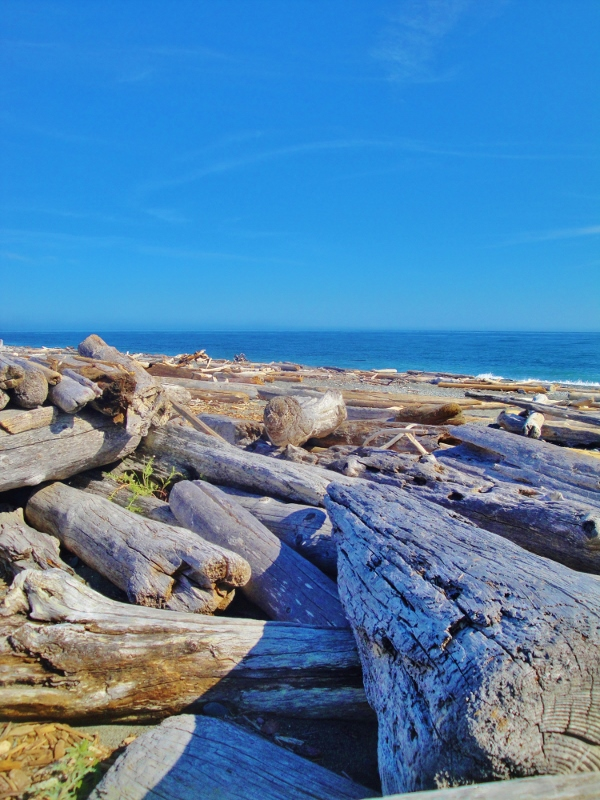 south beach driftwood