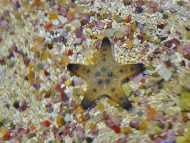 chocolate-chip-starfish-800x600