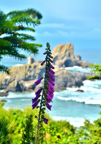 ecola-state-park-4