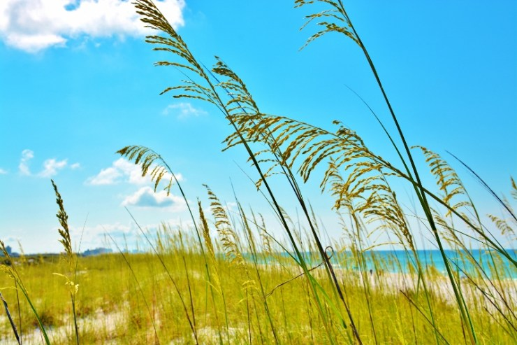 gulfarium-beach-view-800x533