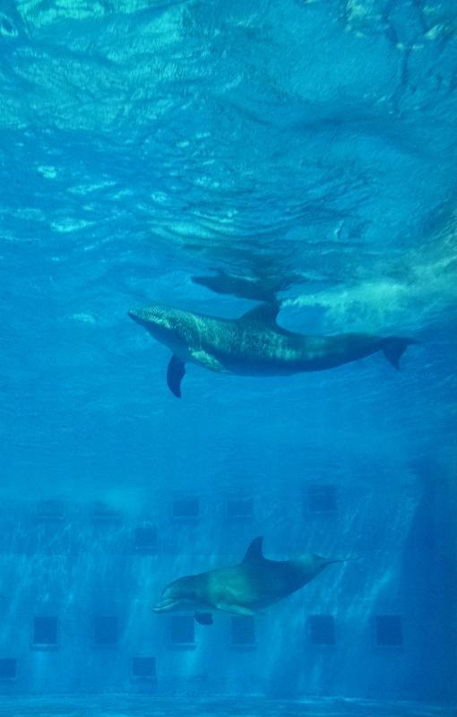 gulfarium-dolphins-6-510x800