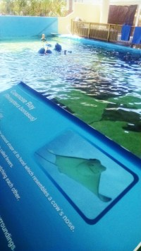 gulfarium-stingray-exhibit-450x800