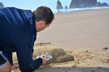 sand-orca-on-cannon-beach-2