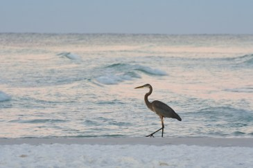 heron-with-waves