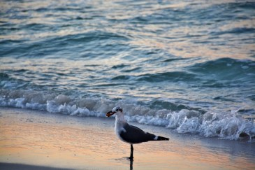 seagull-800x533