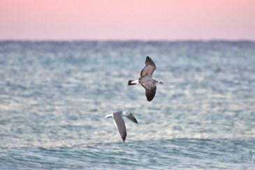 seagulls-800x533