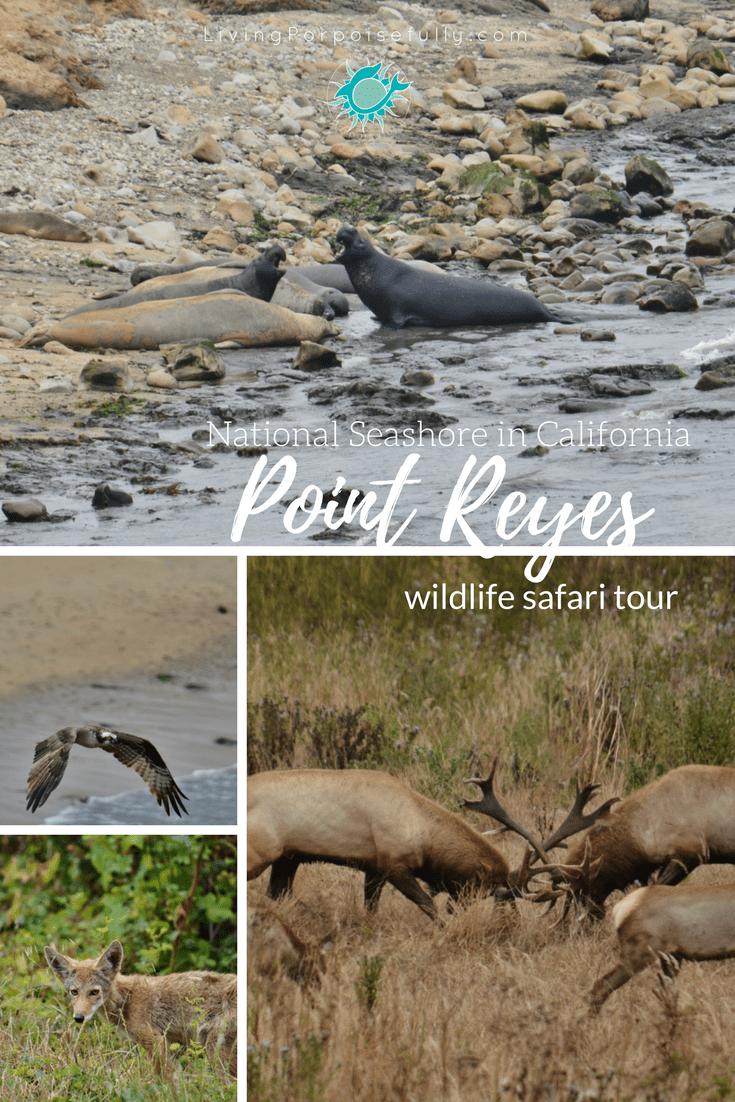 Point Reyes Wildlife Safari Tour collage