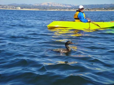 Kayaking in Monterey Bay 5