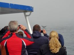 whale watching in Monterey Bay 2